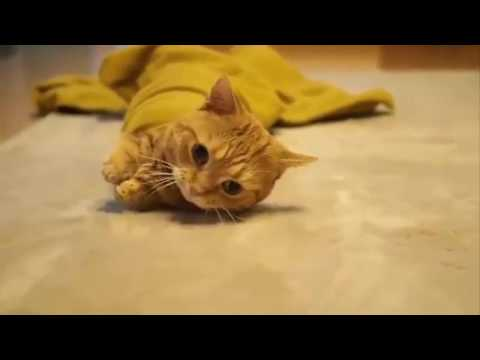 Cute kittens and puppies - Cute kittens meowing | 2