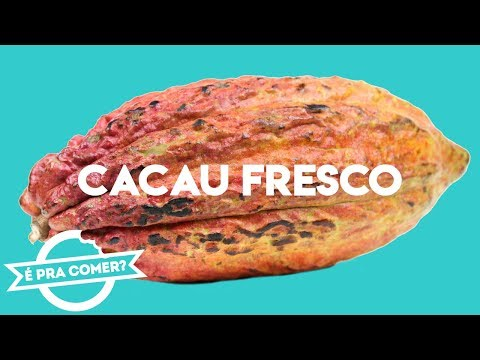 CACAU Fresco: Já comeu o fruto do Cacaueiro? | PraComer // PratoFundo