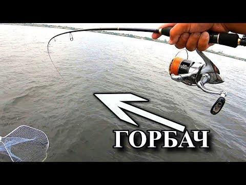 Окуни горбачи клюют отдай спиннинг! Жор ОКУНЯ! Летом!!)) Рыбалка моща!