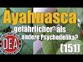 Download Ayahuasca - Wieso sollte man aufpassen? | Drug Education Agency (151)