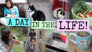 A DAY IN THE LIFE OF Hamster HorsesandCats