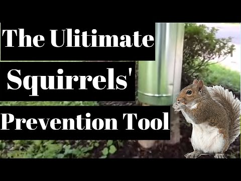 Protect Your Fruit Trees From Birds And Possum Using Th Doovi