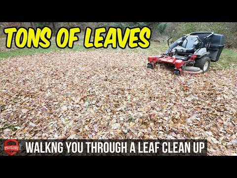 How To Do A Fall Leaf Clean Up - $145 In 1.5 Hours, Bagging Leaves | Simple Basic Clean Up