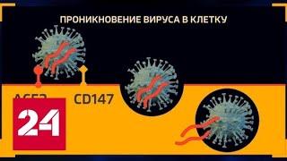 В России в течение трех месяцев может появиться прототип вакцины от коронавируса - Россия 24