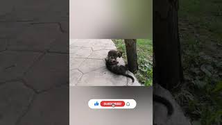 Cute Kittens Playing Compilation