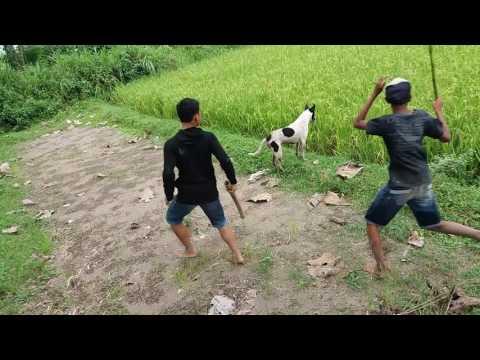 Berburu garangan rase (ngadiluwih part 3)