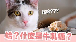 貓的牛軋糖-貓副食食譜-好味貓鮮食廚房ep147