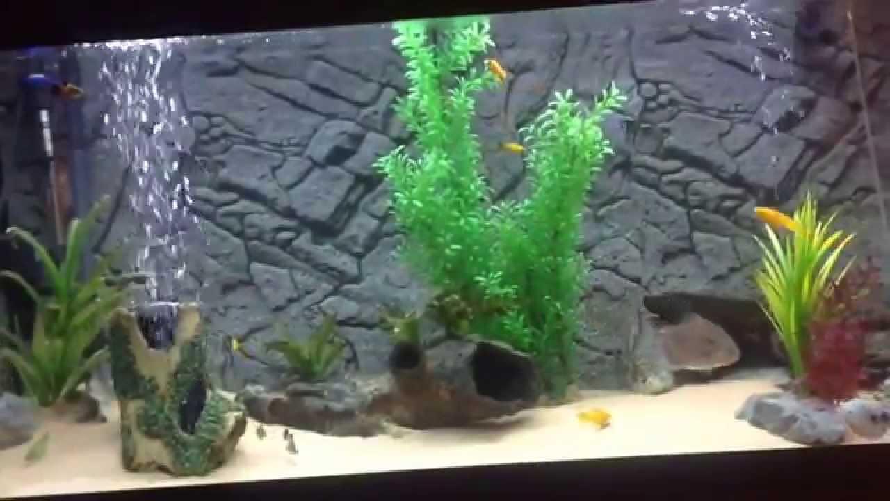 All pond solutions aquarium fish tank external filter - All Pond Solutions 2000ef In Rio 350 Aquarium