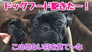フレブル子犬タプさん生後1歳と29日目♪ 最近、特に朝ごはんのドッグフー...