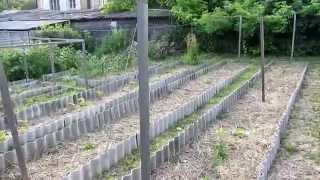 Семья Бровченко. Как правильно делать растяжки намноголетние подвязки помидоров, огурцов и перцы.