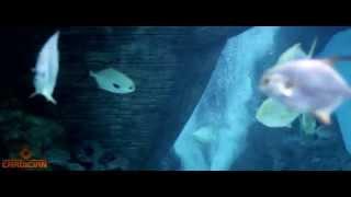Fathom. Сокровище морских глубин