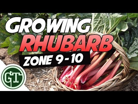Growing Rhubarb in Hot Climates - Zone 9/10 | Organic Garden Methods