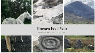 Horses Feel You