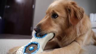 Tough Dog Chewers Challenge - Forever Bone