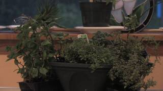 Gardening Tips & Flowers : How to Small-Container Garden (Kitchen Herbs)
