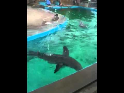 Retarded Seal And A Hose Youtube