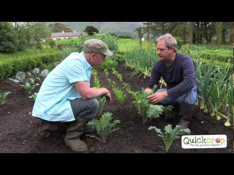 Grow Your Own Kale With Quickcrop