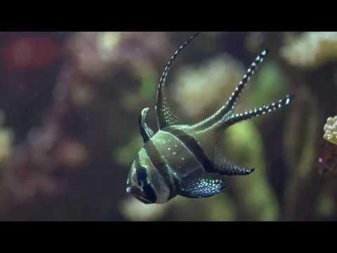 Conservation & Education at Bristol Aquarium