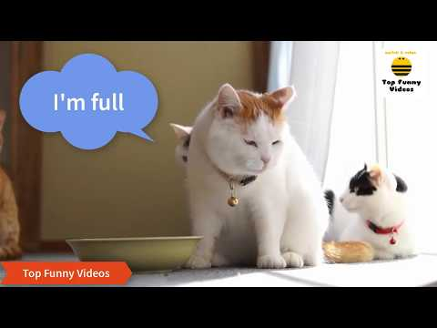 FUNNY CATS Compilation 2017 [😂Special Version with FUNNY CAPTIONS] P23 - BEST Funny Cat Videos Ever
