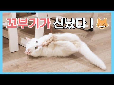 고양이가 신났다! 뒹구르르 꼬부기
