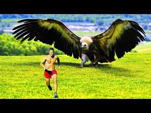 NYATA!!! Inilah Burung TERBESAR Di Dunia Yang Masih Ada Sampai Saat Ini