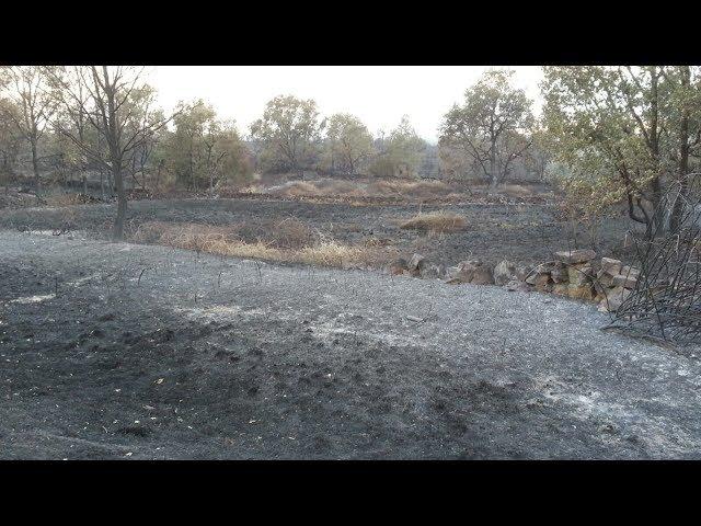 Se reaviva el incendio en Aldeadávila de la Ribera