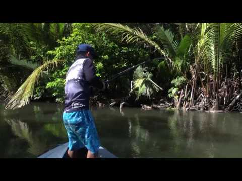 Papuan Spottail Bass fishing with