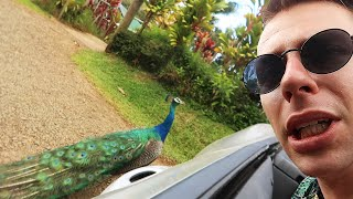 JEG ER MUNDLAM! *HAWAII ROADTRIP*