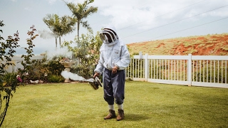 Learn how bees can help you to get outside slow down and care about what