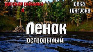 Русская рыбалка 4 рр4 rf4 река Нижняя тунгуска Ленок острорылый
