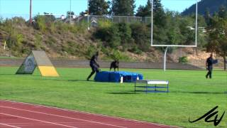 2014 Canadian Police Canine Association Trials From Kelowna -  Reg, Darcy And Jon  -  Youtube