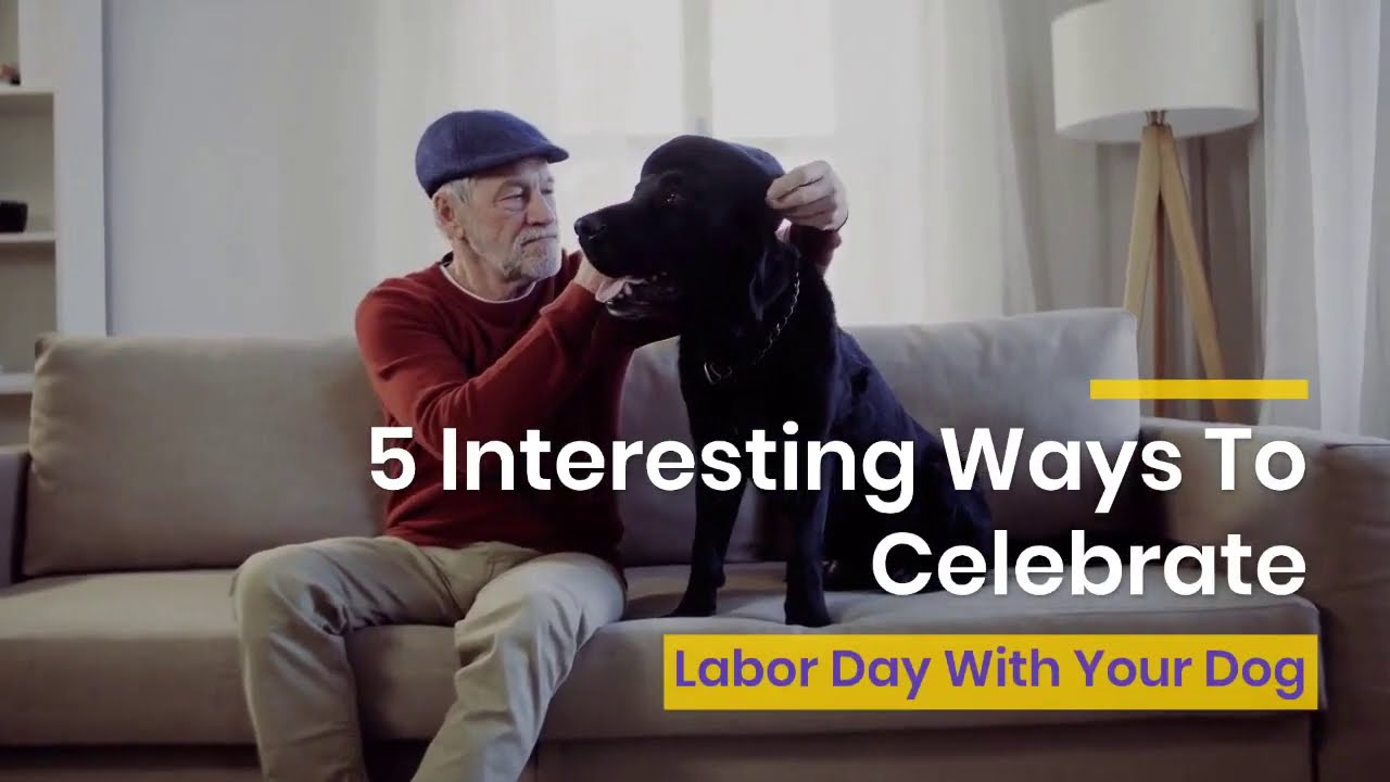 5 Interesting Ways To Celebrate Labor Day With Your Dog