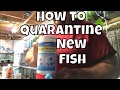 How to quarantine new fish using EM Erythromycin API General Cure and  ick X new fish unboxing