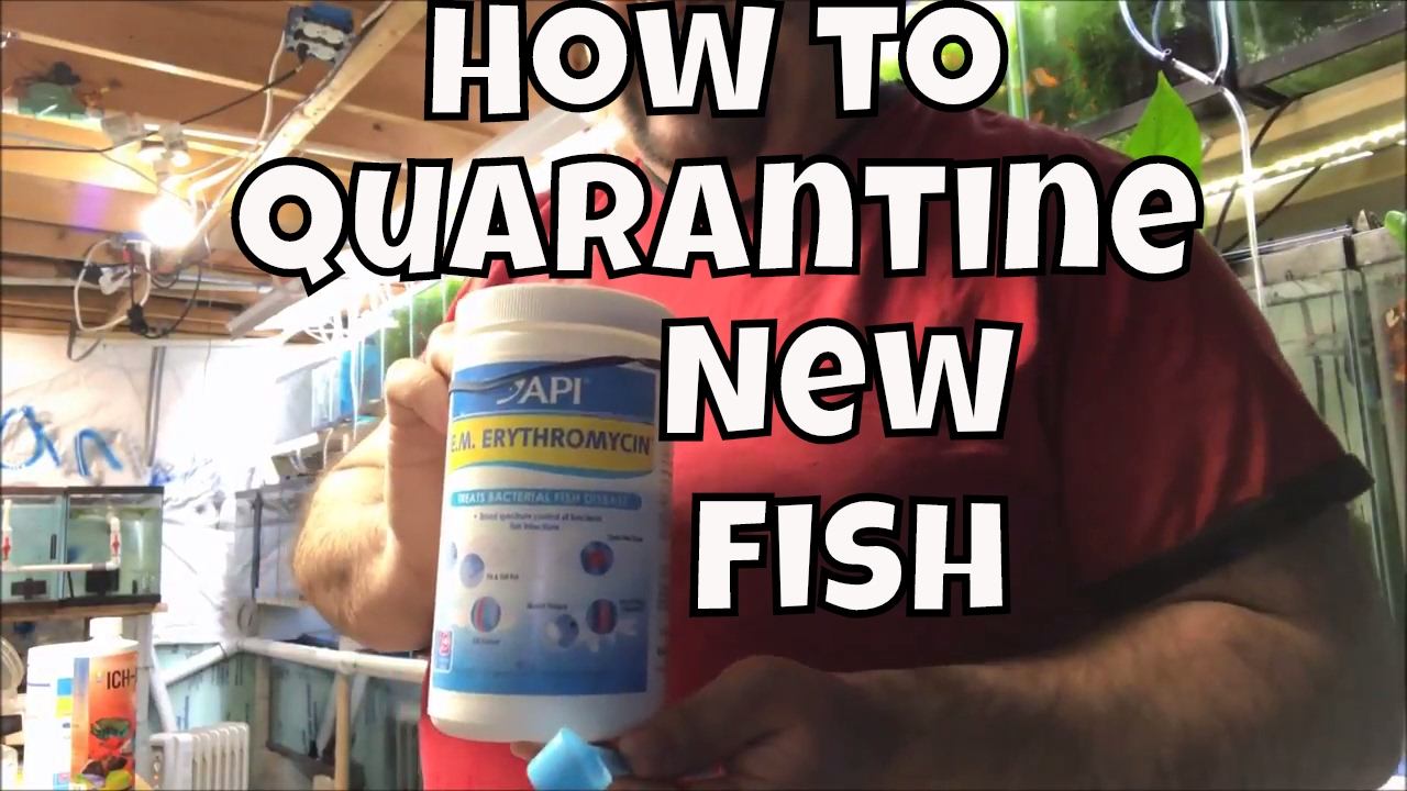 How to quarantine new fish using EM Erythromycin API General Cure and ick X  Fish Room Unboxing