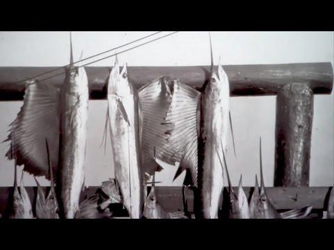 King Sailfish Mounts - History