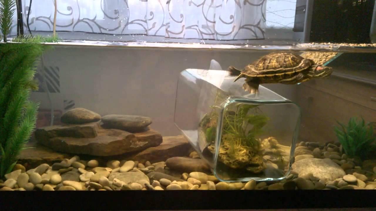 Черепашник для красноухой черепахи