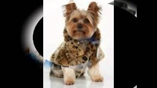 одежда для собак иванко