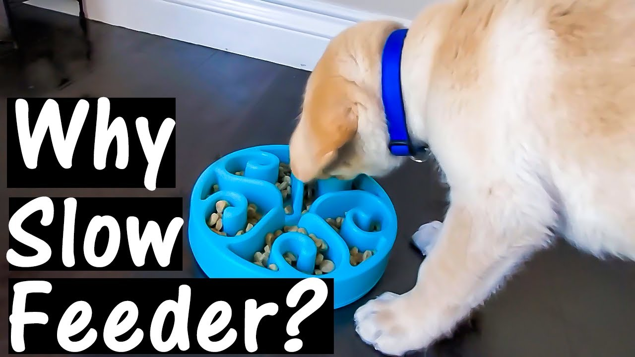 We got a Slow Feeder for our Fast Eating Labrador Puppy   English Subtitles