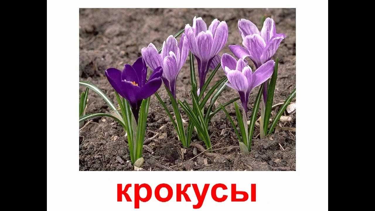 Полевые цветы фото и названия для детей презентация