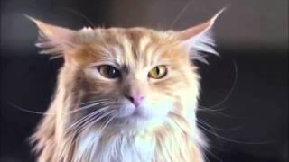 Подборка лучшей рекламы с котами