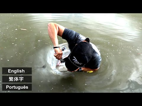 Over 30kg Giant fish in City River | Okinawa GT Lure Fishing