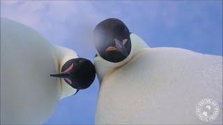 Emperor penguins take selfie in Antarctica