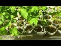 Starting Plants From Seed Super Cheap!