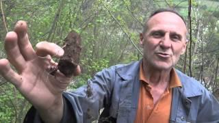 ljekovita biljka BLJUSC-- healing herb