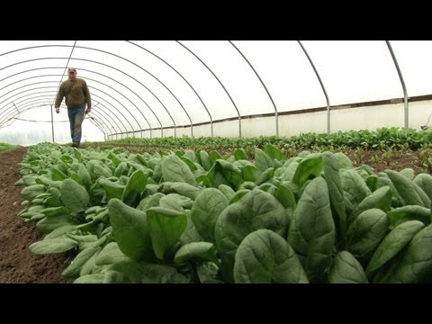 Winter Greenhouse Farming