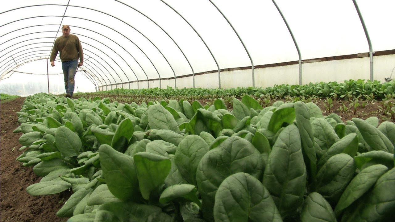 These 4 start-ups are promoting hydroponics in India