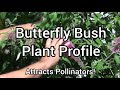 'Butterfly Bush' Plant Profile! ...attracts pollinators...