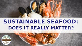 Download Sustainable Seafood Movement - Is Sustainable Seafood Important - Ocean Conservation  Overharvesting