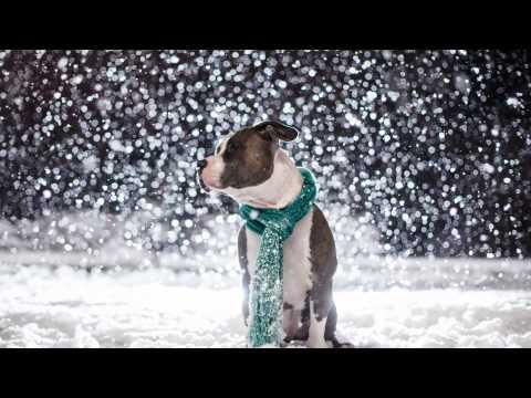 Andre' Rieu  -  Fernando - Celebrates ABBA