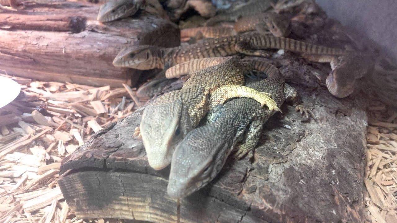 Reptile Vet Near Me